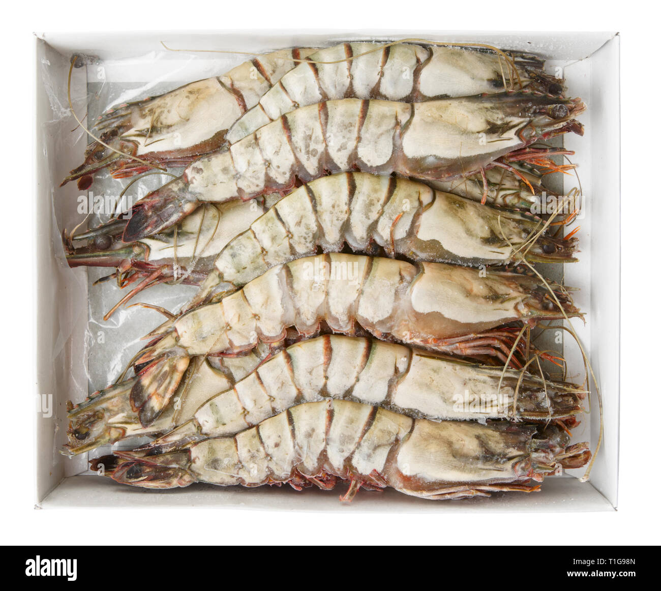 Giant prawns in retail pack, isolated on white with clipping path - Stock Image
