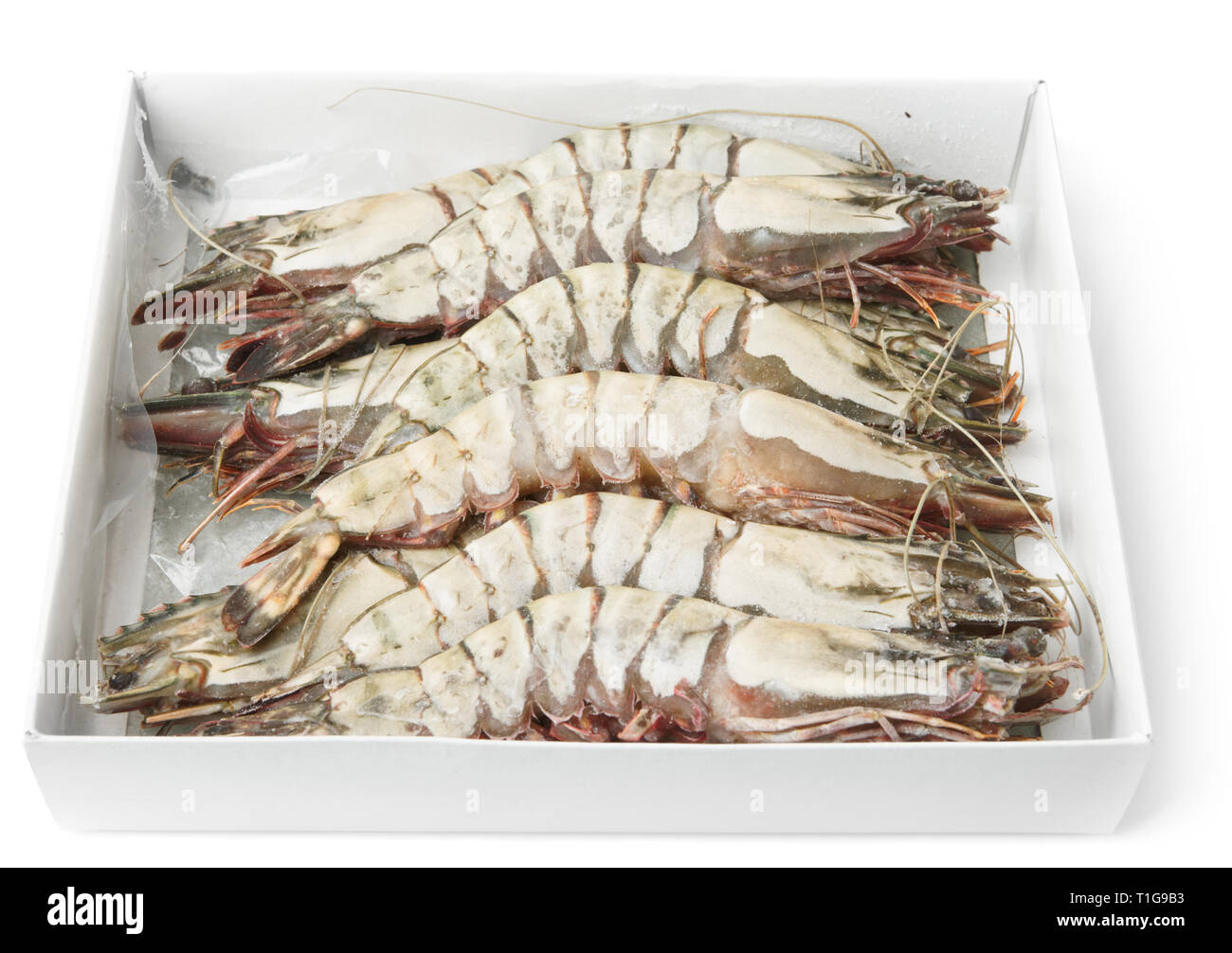 Giant prawns in retail pack, isolated on white background - Stock Image