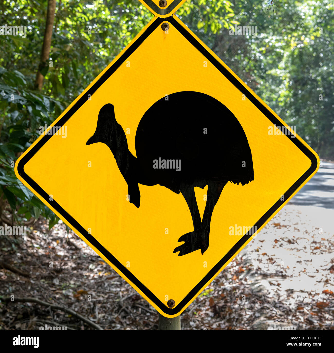 Beware of Cassowary crossing road sign in the Daintree National Park, Queensland, Australia - Stock Image