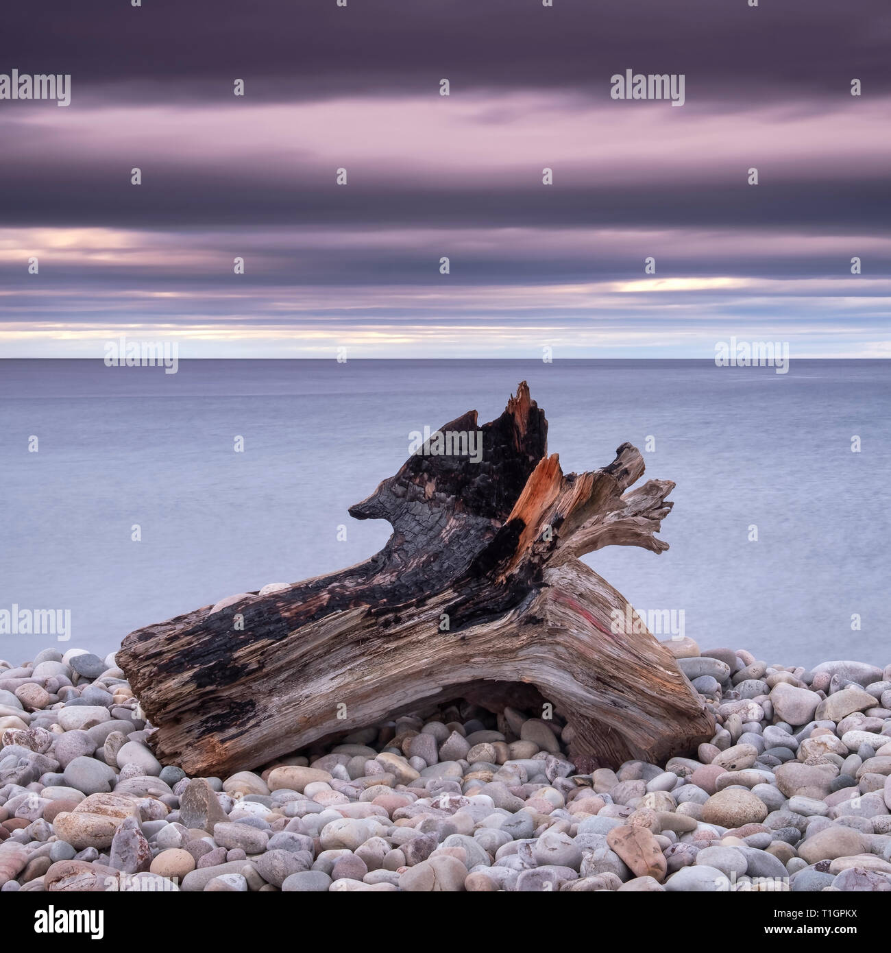 Driftwood on Spey Beach and the Moray Firth, Moray, Scotland, UK - Stock Image