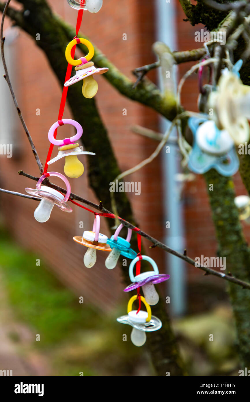 North Sea island Langeoog, East Friesland, Lower Saxony, many pacifiers hang in a tree, in front of a house, typical custom in families with newborns, - Stock Image