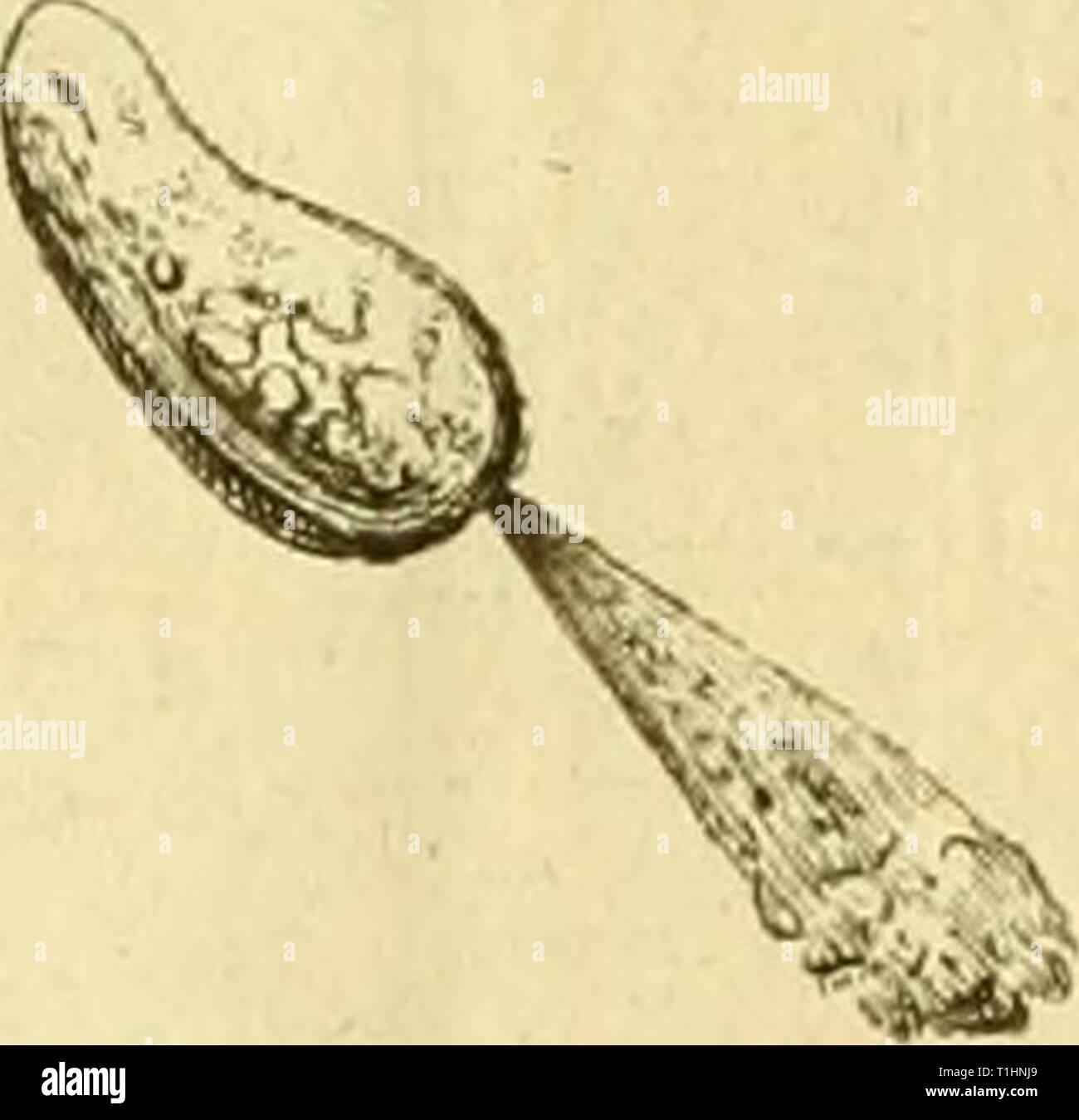Dissertation sur la génération, les Dissertation sur la génération, les animalcules spermatiques, et ceux d'infusions, avec des observations microscopiques sur le sperme et sur différentes infusions  dissertationsurl00glei Year: 1799  Ck ennevu, tn/if e/i e&fiériefice ie U uui. ÏÏ. (cui de u/u/e flû/f'ee ottosée dîstil&e IJâifeif ouverte lyarfej j&rmdf XXL m. il i jj. NUI. ! /.    6. Stock Photo
