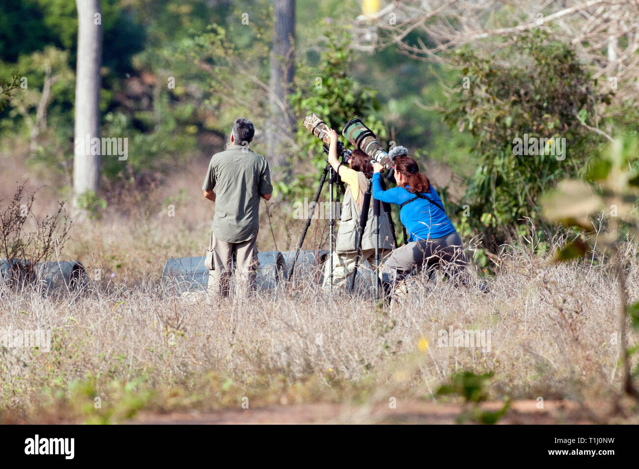 Photographers photographing a bird in The Pantanal in Brazil - Stock Image