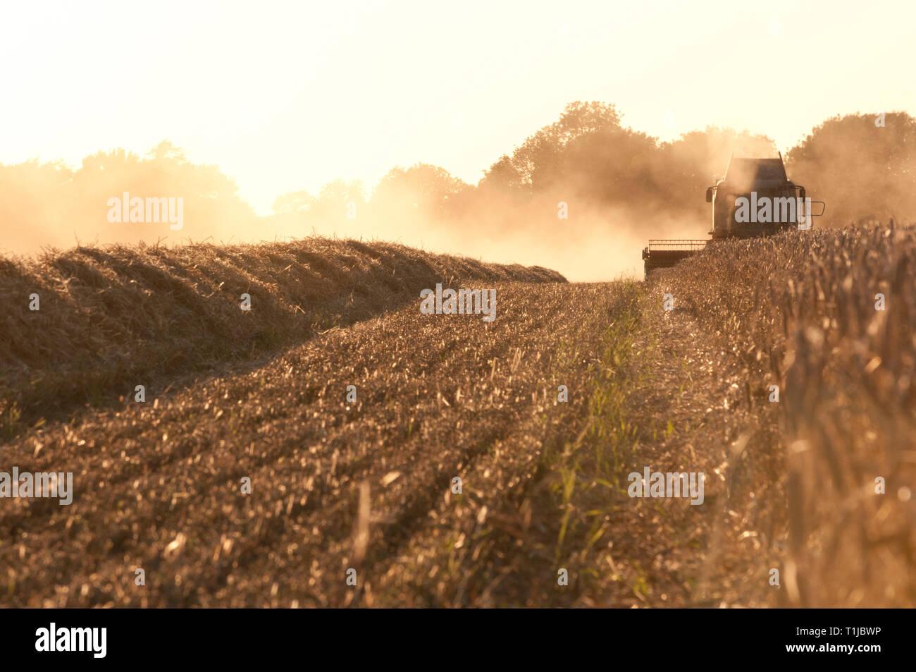Combine harvester harvesting barley Stock Photo