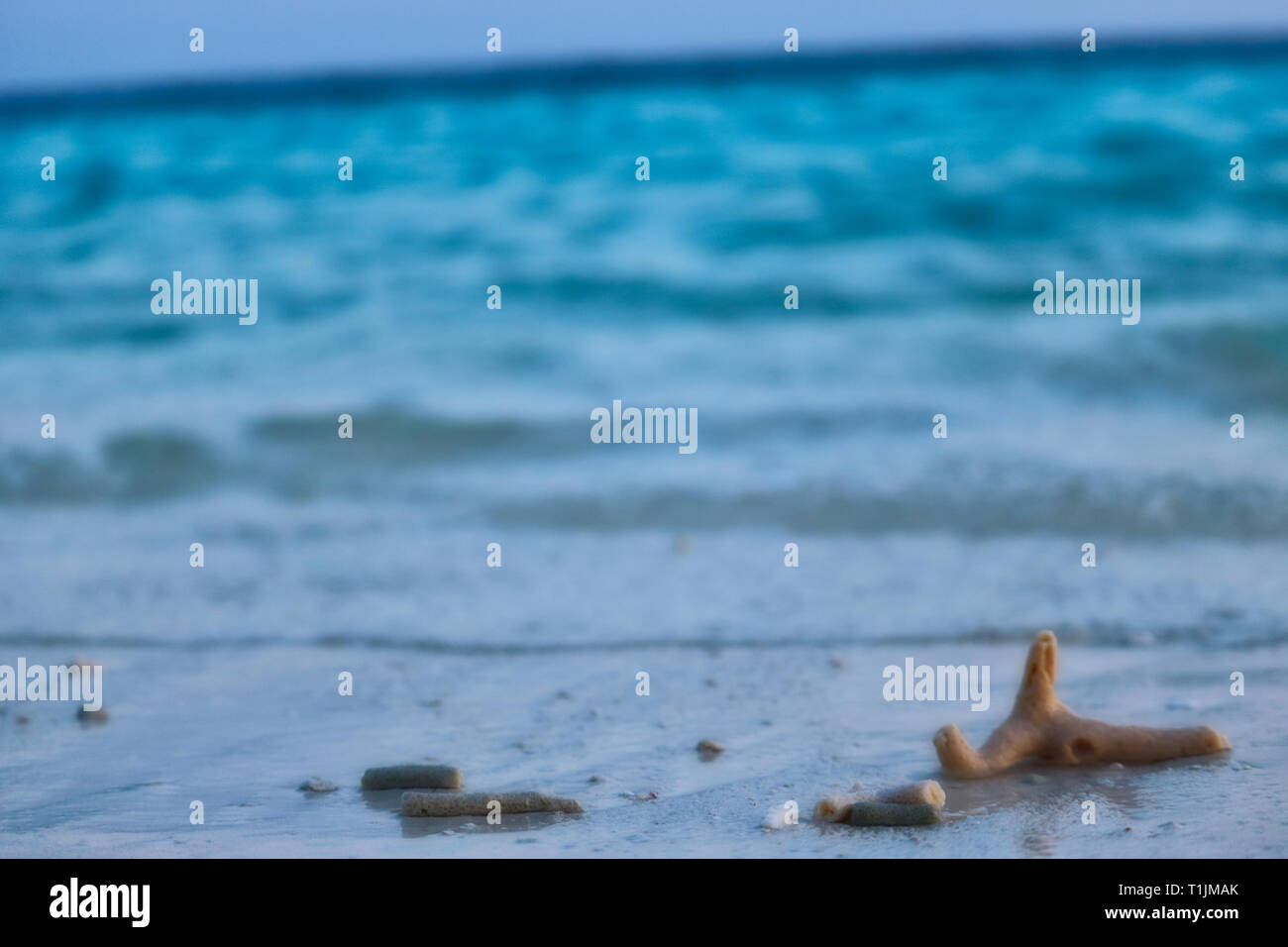 This unique image shows the natural beach of a Maldivian island where coral pieces from the sea have been touched - Stock Image