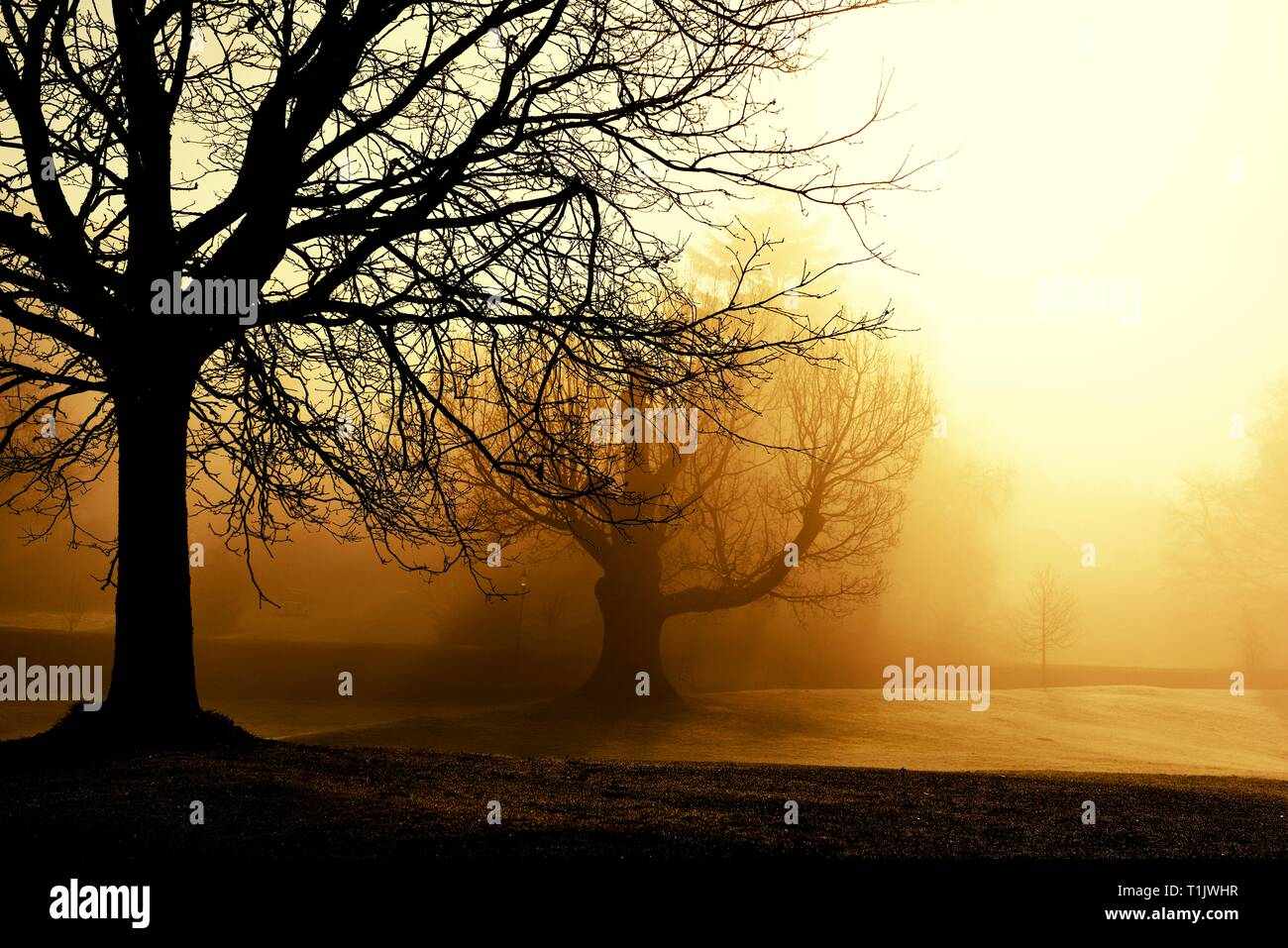 A misty morning in. Glebe park,Bowness on Windermere,Lake District,Cumbria,England,UK Stock Photo
