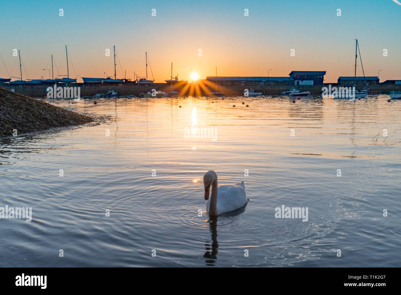 Penzance, Cornwall, UK. 27th Mar, 2019. UK Weather. Feeling cooler than yesterday, but still a glorious sunrise at Penzance harbour, with these inquisitive swans coming to meet the photographer at the waters edge. Credit: Simon Maycock/Alamy Live News Stock Photo