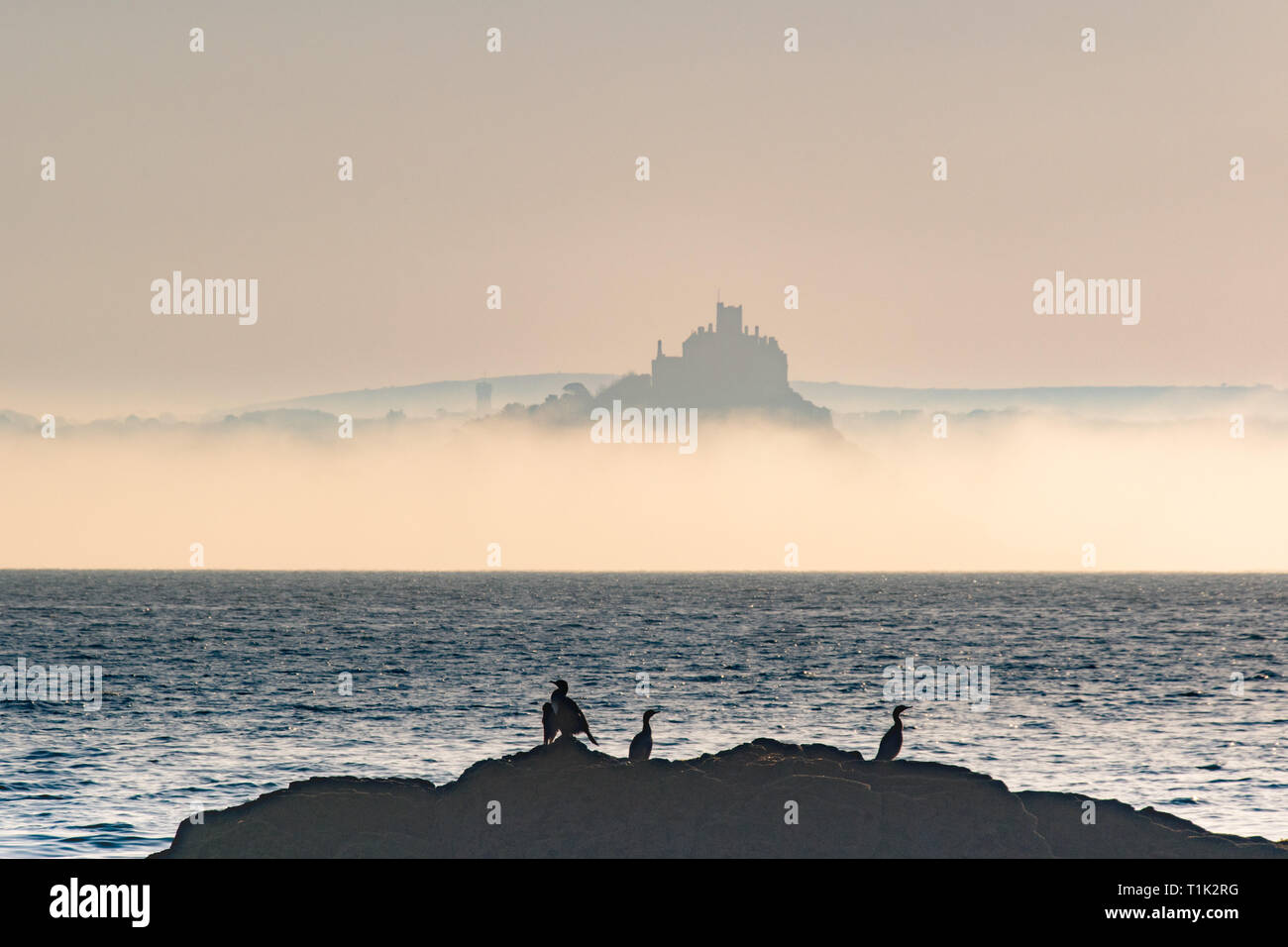 Penzance, Cornwall, UK. 27th Mar, 2019. UK Weather. Shortly after sunrise sea mist formed on the surface of the sea at Mounts Bay, shrouding the base of St Michaels mount. In the foreground cormorants warming themselves in the early morning sunshine Credit: Simon Maycock/Alamy Live News Stock Photo