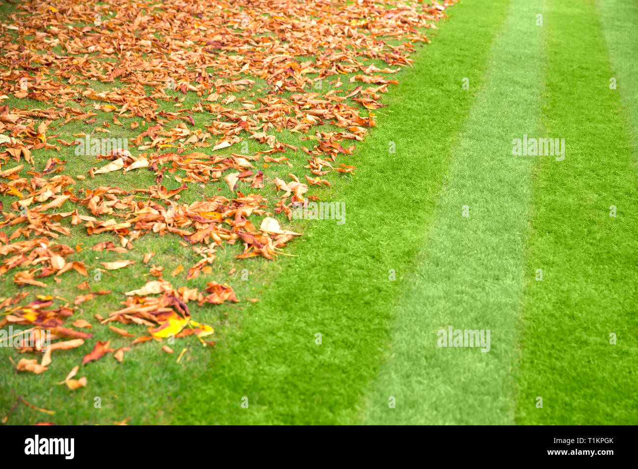lawn stripes and leaves - Stock Image