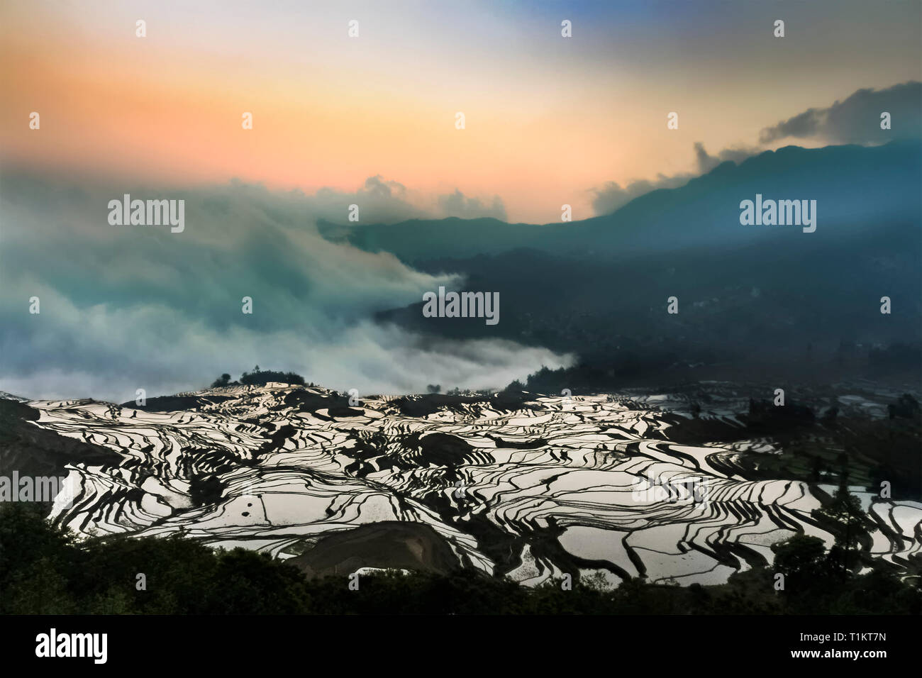 Aerial view of Yuanyang rice terraces at Duoyishu view point with its mystic sea of clouds at daybreak - Stock Image