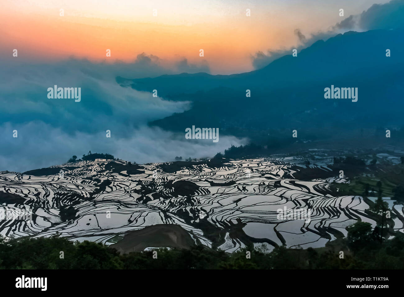 Aerial view of Yuanyang rice terraces at 1900 meters above sea level with its mystic sea of clouds at daybreak - Stock Image