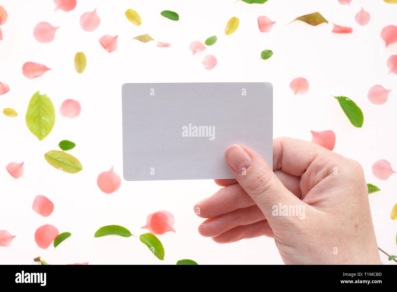 Woman holding blank white business card mock up in hand over white background with blooming springtime flower petals and leaves scattered around Stock Photo