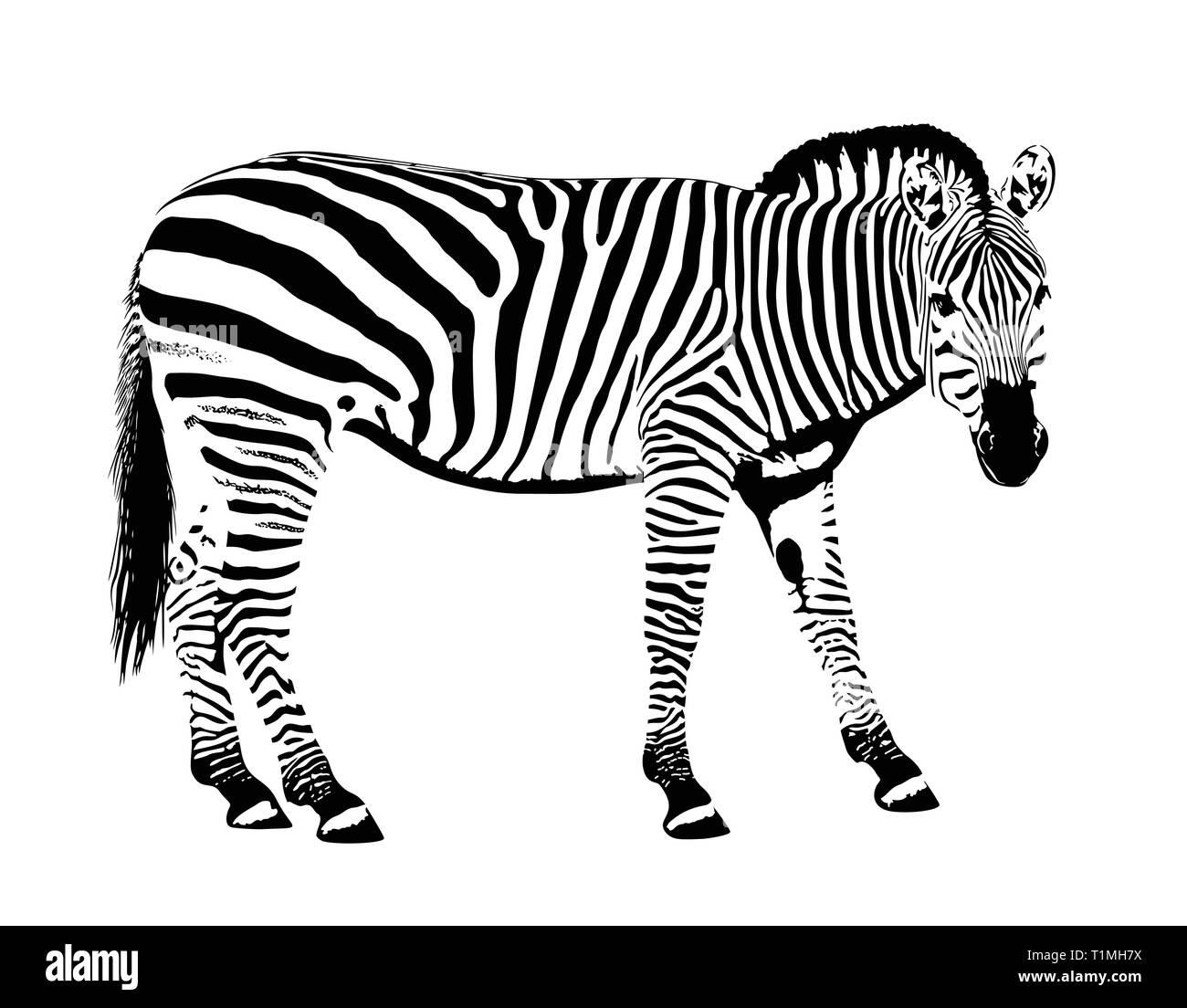 Zebra animal stencil mask hand drawn vector illustration - Stock Image