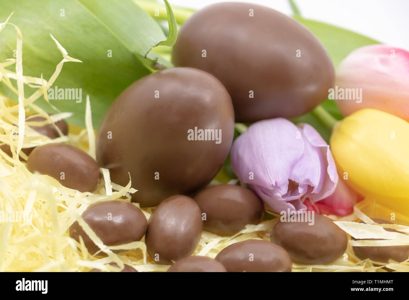 Shabby chic Easter with chocolate eggs and pastel tulips - Stock Image
