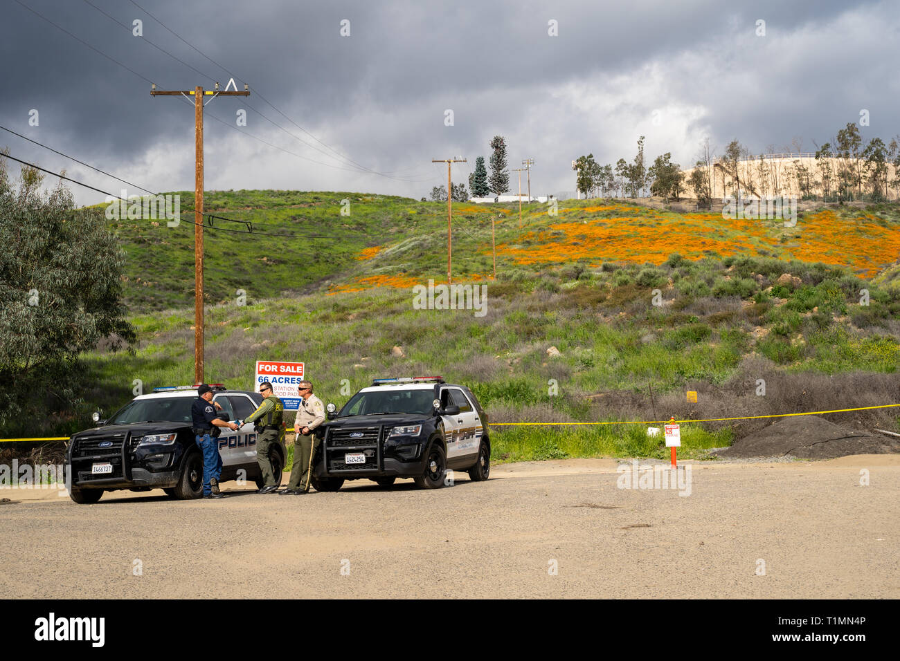 Lake Elsinore, California - March 20, 2019: Riverside County sheriff department and the Lake Elsinore Police patrol the Walker Canyon Poppy Fields due - Stock Image
