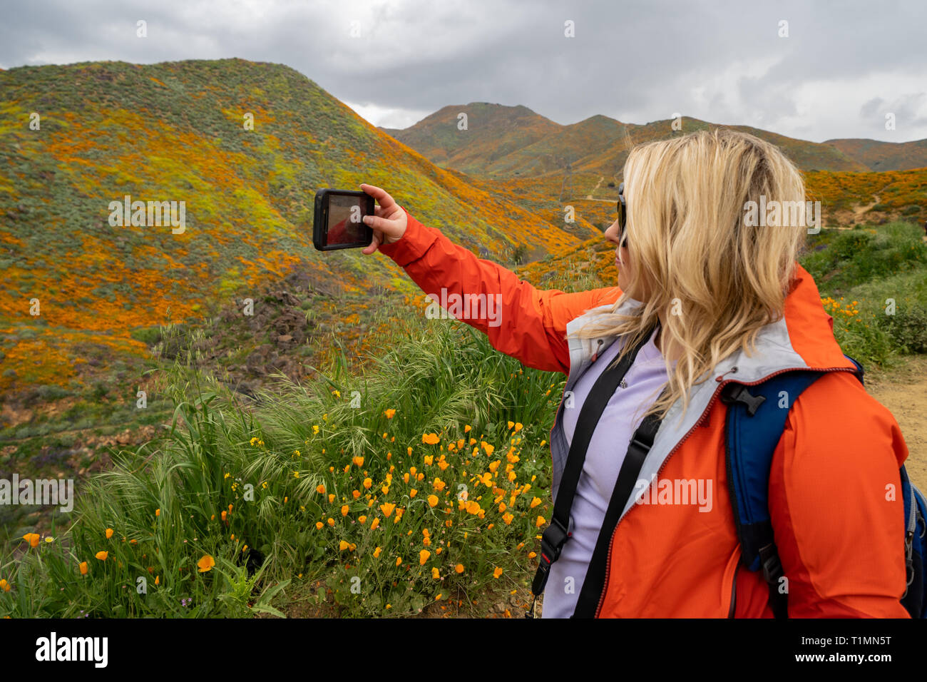 Blonde woman hiker takes a selfie with a cell phone while at Walker Canyon, enjoying the California Poppies superbloom - Stock Image