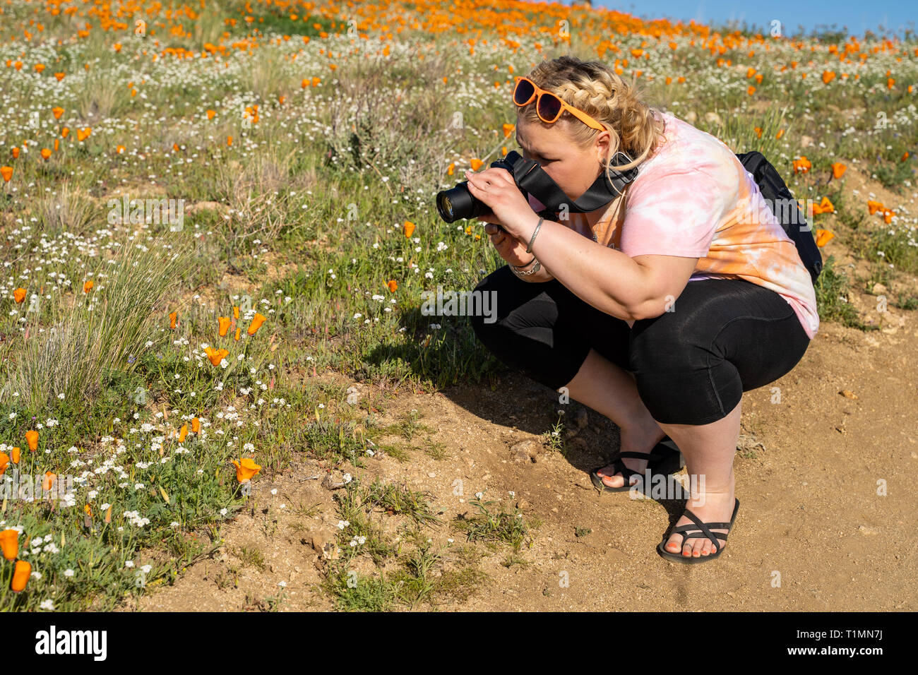 Woman photographer takes pictures of poppies with a DSLR camera during the California SuperBloom - Stock Image