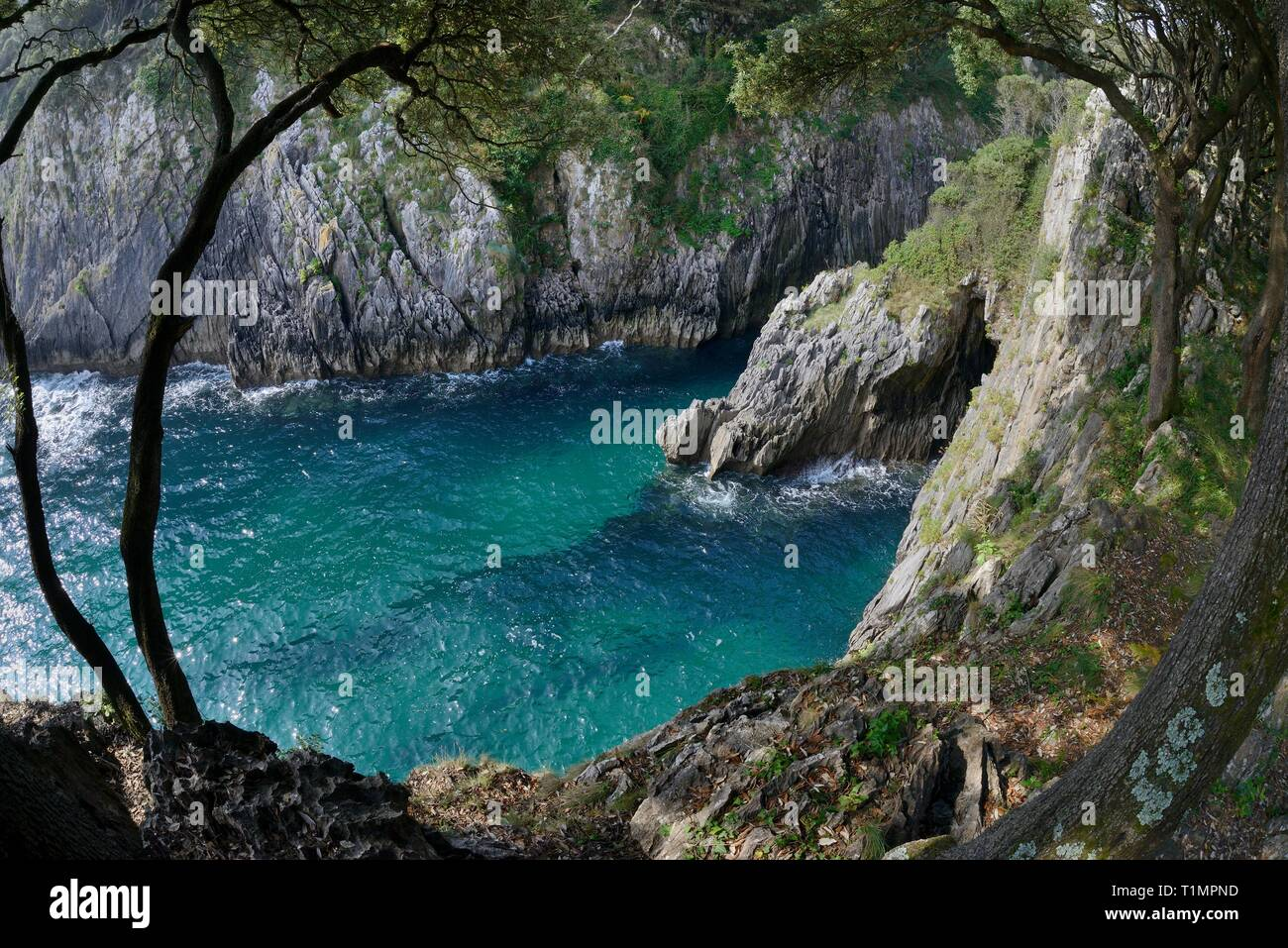 Moral Cove on Cape Emeterio, overhung with Holm oak trees (Quercus ilex), Pimiango, Asturias, Spain, August 2016. - Stock Image
