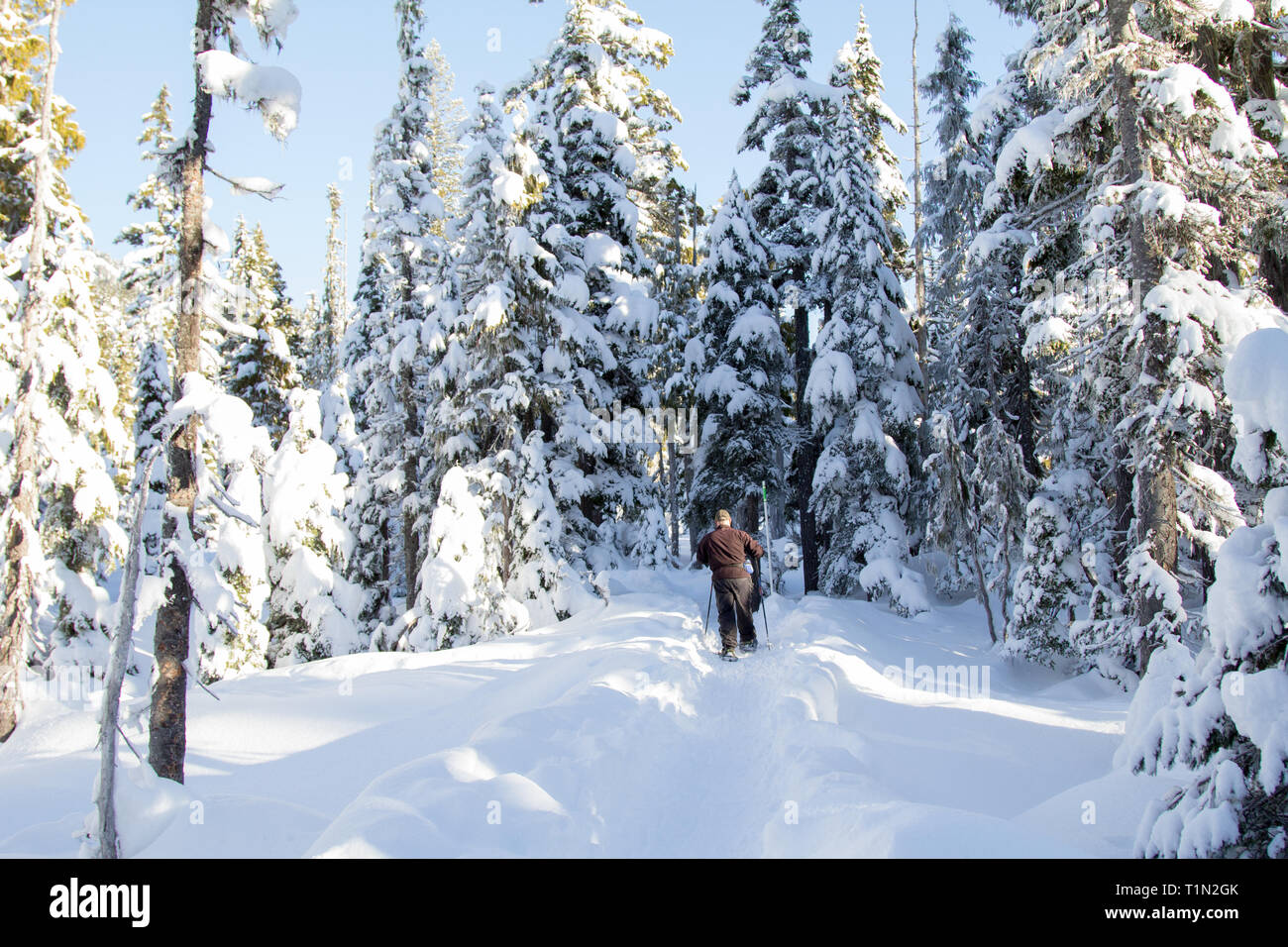 Person snowshoeing in deep snow in the forest Stock Photo