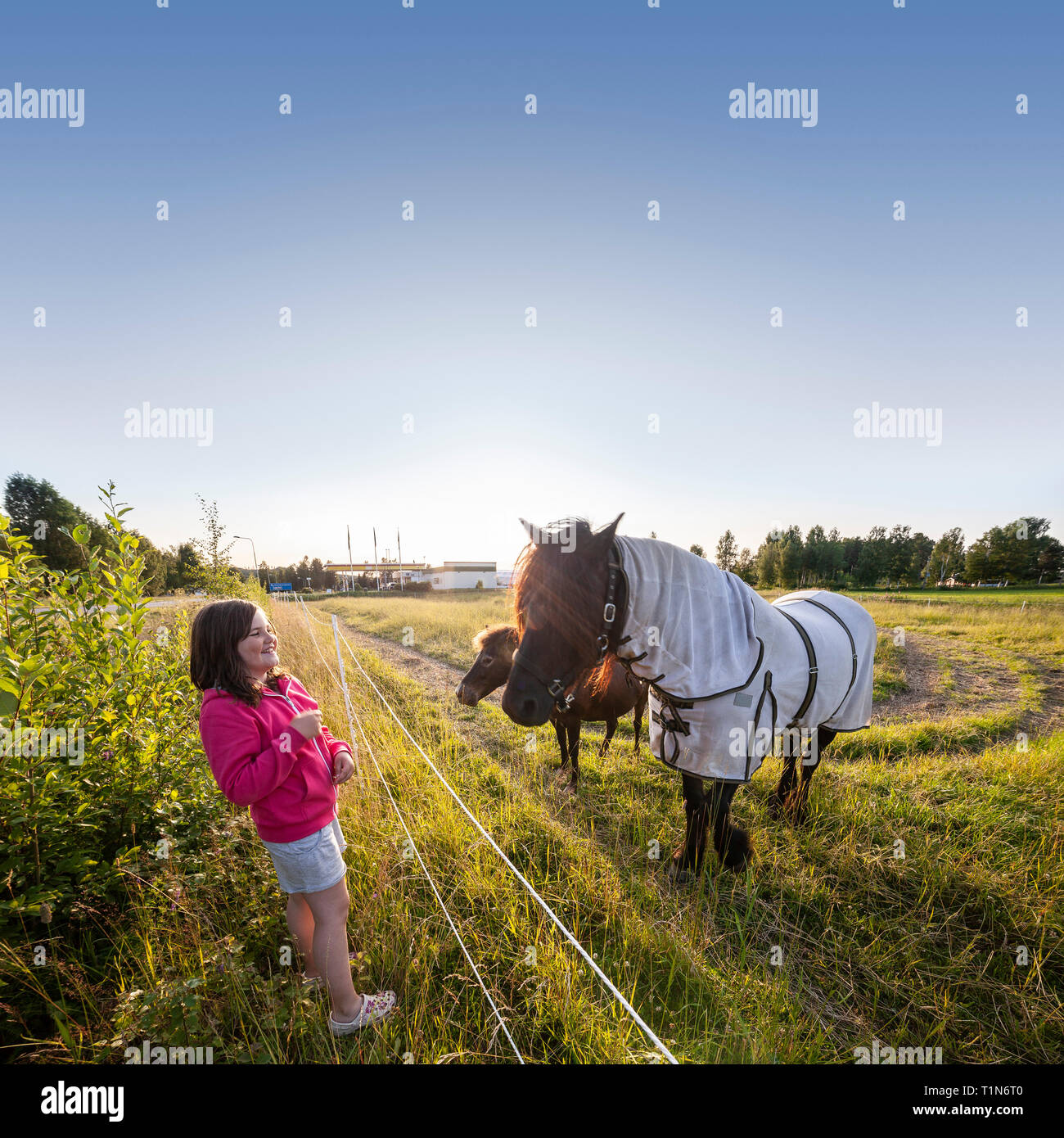 Girl and a horse. Dalarna / Dalecarlia, Sweden, Scandinavia. Stock Photo
