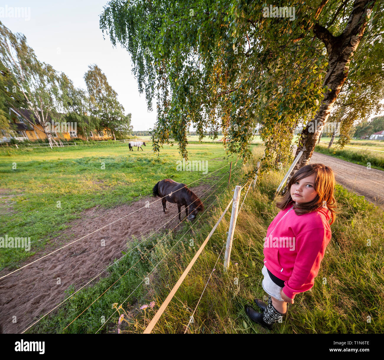Girl and a horse. Dalarna / Dalecarlia, Sweden, Scandinavia. - Stock Image