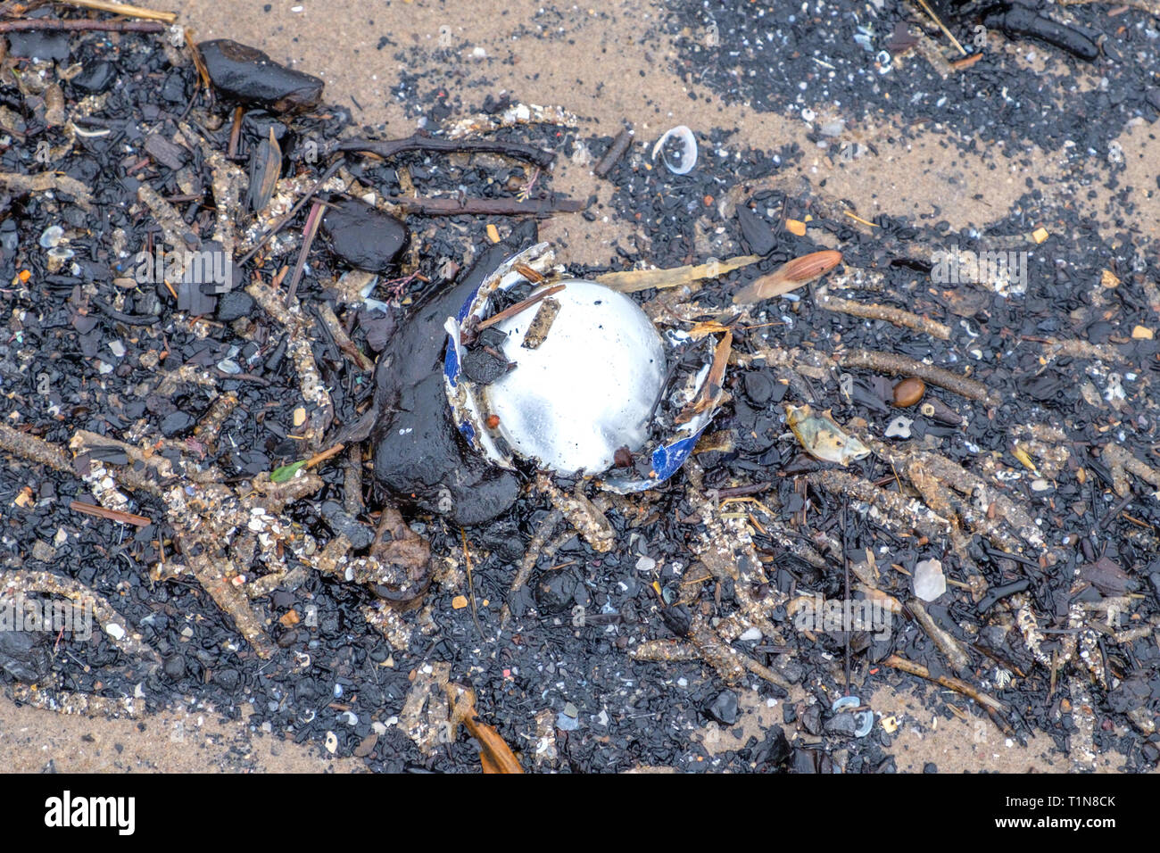 Environmental image of Pollution with the remains of a aluminium drinks can that has been washed up on the beach in Irvine North Ayrshire ion Scotland - Stock Image