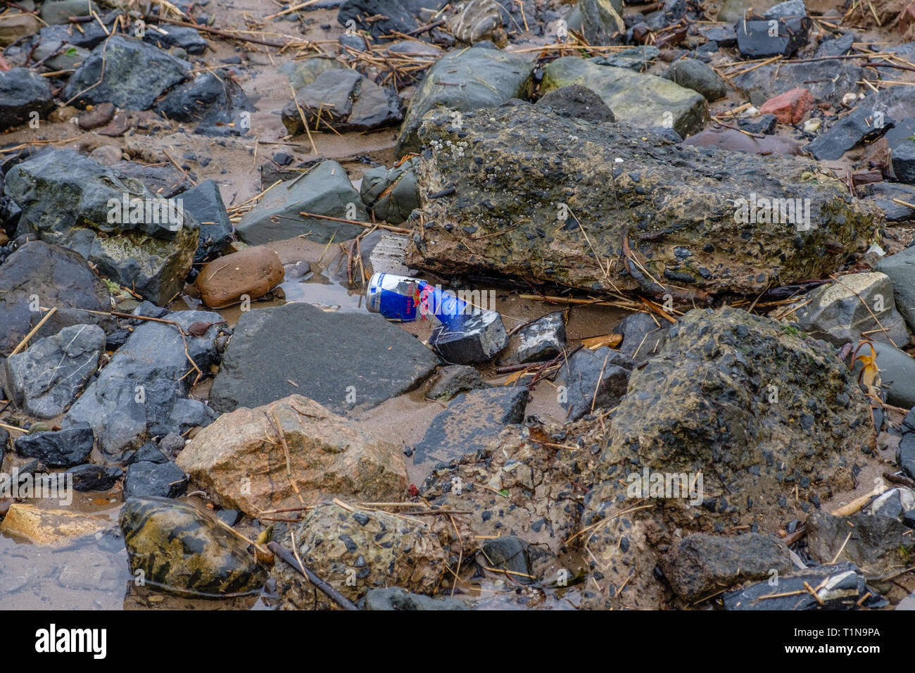Irvine, Scotland, UK - March 18, 2019: Environmental image of Waste with Aluminium Red Bull Drinks Can being discarded on the beach in Irvine  Scotlan - Stock Image