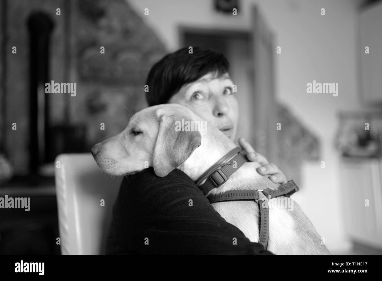 Dog love dog hug black and white photo stock image