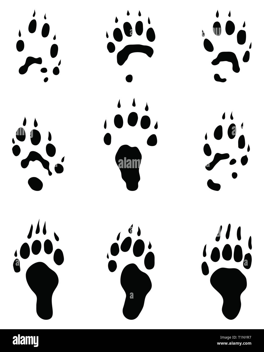 Black traces of polecat paws on a white background - Stock Image