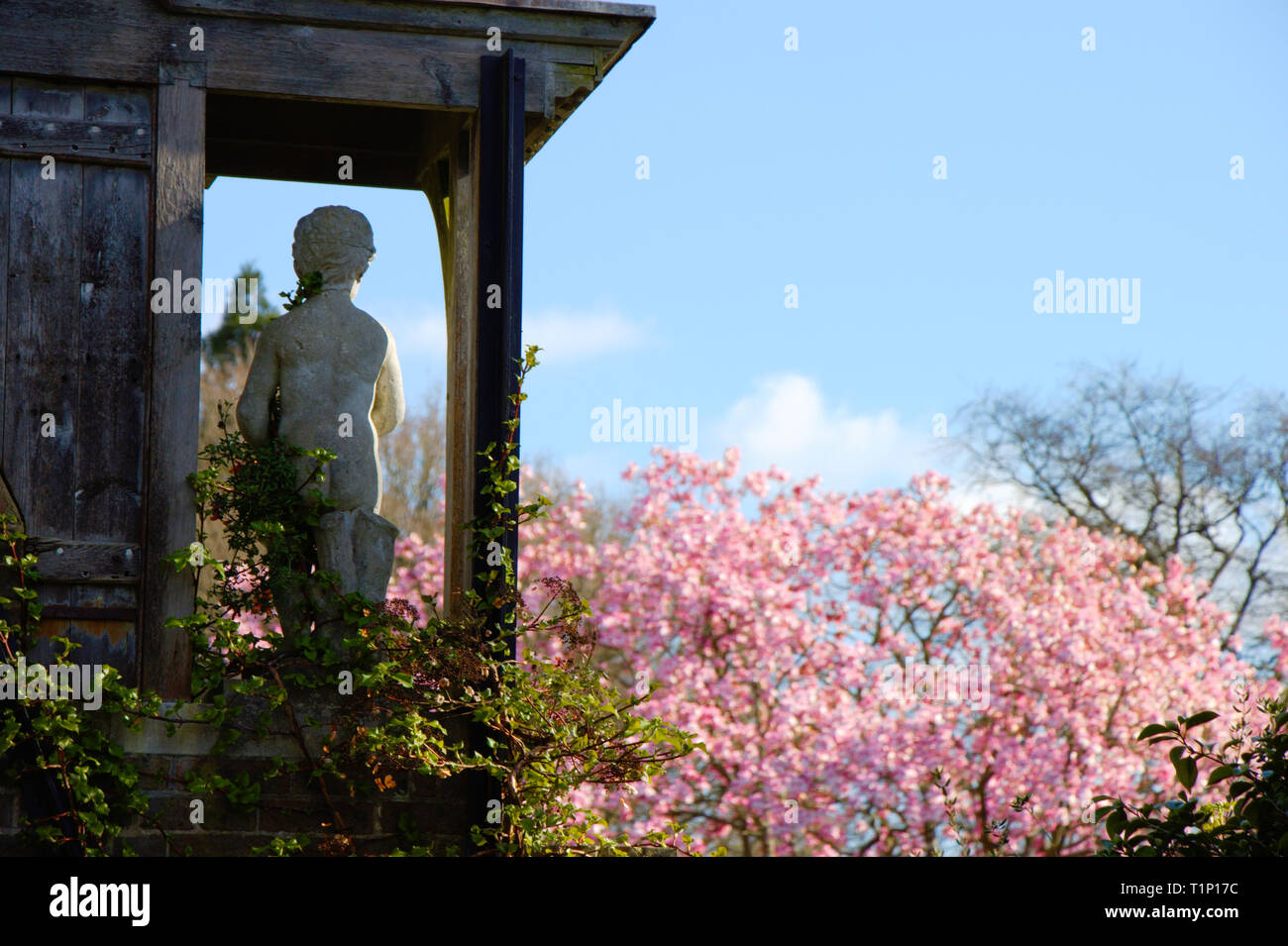 Back side of a classical antique statue made of marble in a garden in spring. - Stock Image