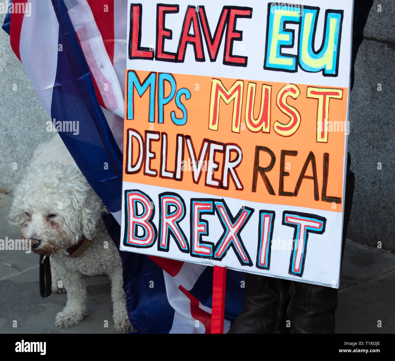 London, UK. 28th March 2019. Brexiteer and her dog stand in front of the House of Parliament demonstrating with boards and Union Jacks. Credit: Joe Kuis / Alamy Live News - Stock Image