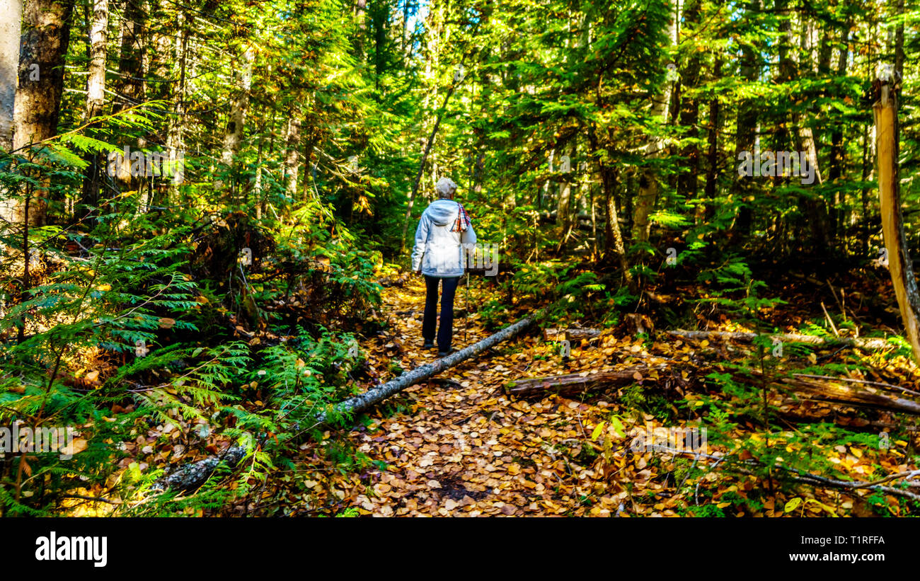 Senior woman on a hiking trail to the north edge of Dawson Falls in Wells Grey Provincial Park in British Columbia, Canada in Fall season - Stock Image