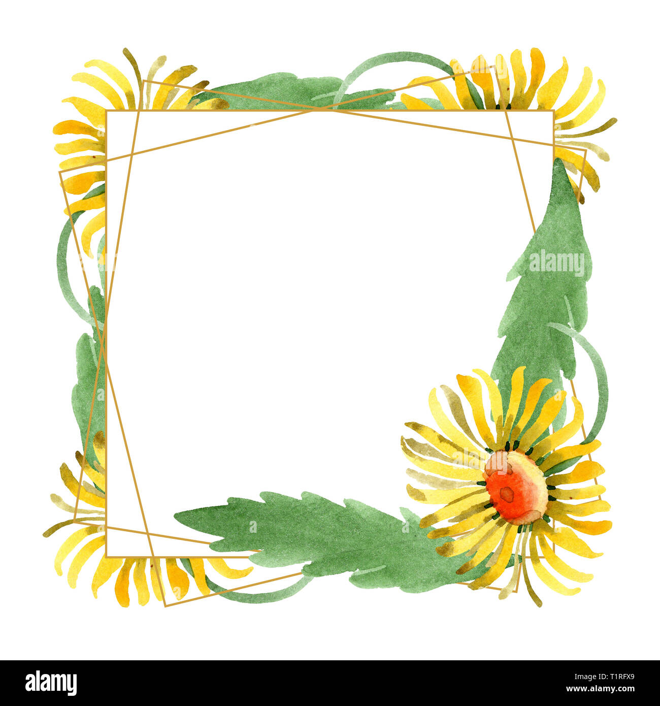 yellow daisy floral botanical flowers watercolor background illustration set frame border crystal ornament square stock photo alamy https www alamy com yellow daisy floral botanical flowers watercolor background illustration set frame border crystal ornament square image242077201 html