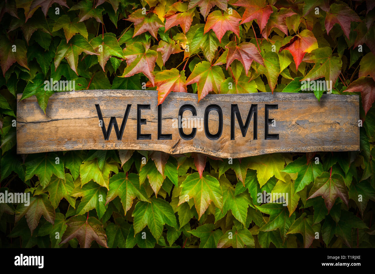 Rustic Retro Wooden Carved Welcome Sign Against A Beautiful Leafy Backdrop Outside A School Or Hotel Or Restaurant - Stock Image