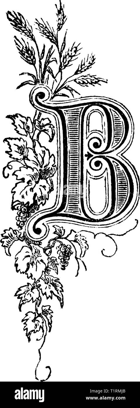 19726a539480 Vintage antique line drawing or engraving of decorative capital letter B  with floral ornament or embellishment