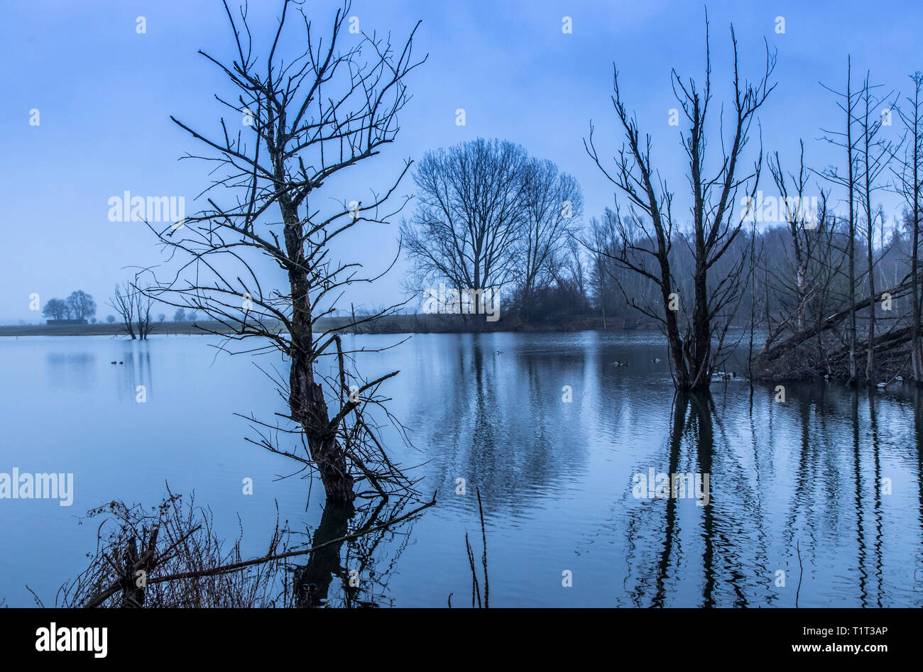 The nature reserve Bislicher Insel, near Xanten on the Lower Rhine, Germany Stock Photo