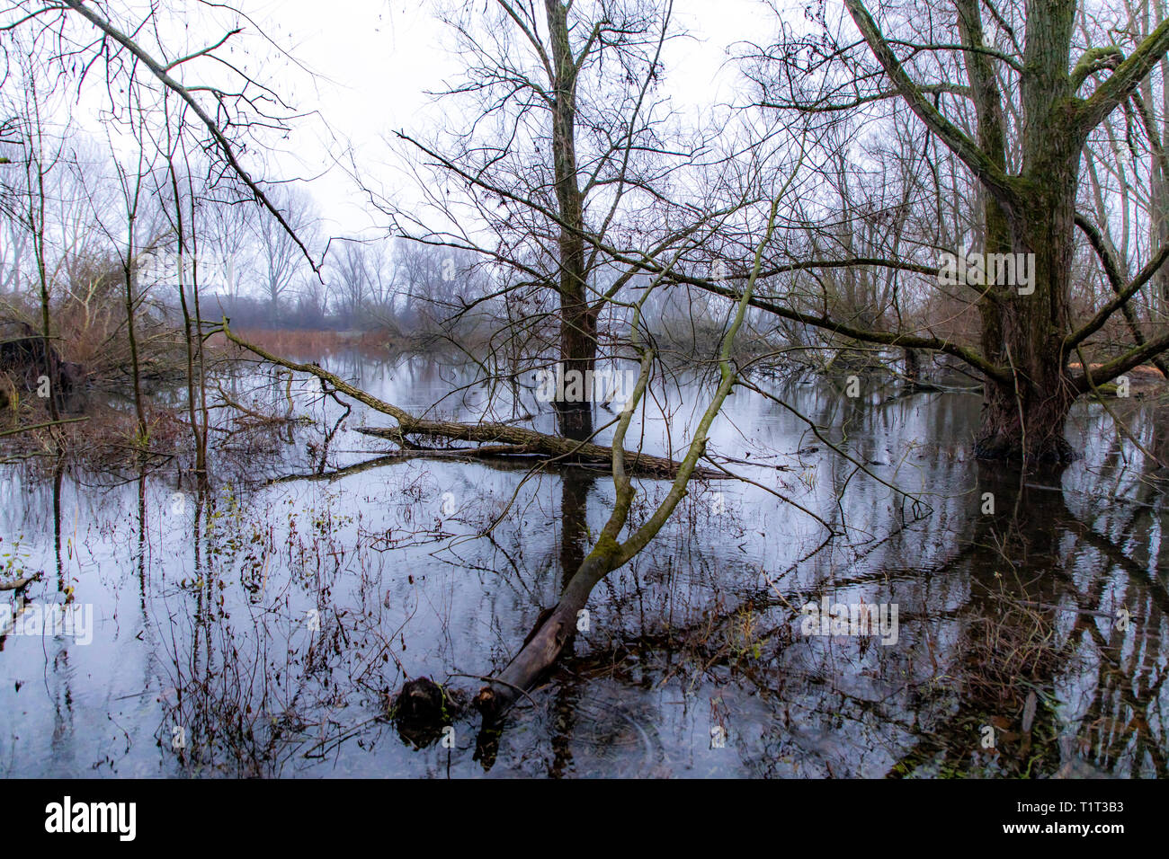 The nature reserve Bislicher Insel, near Xanten on the Lower Rhine, Germany - Stock Image