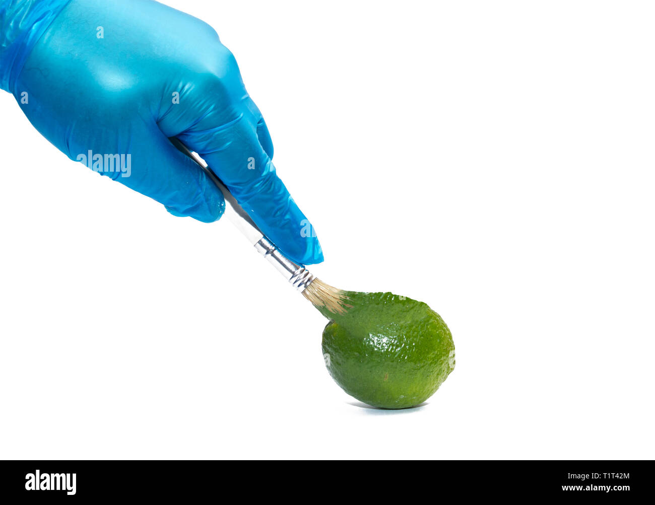 Lime genetic color manipulation Genetically modified food. Genetic engineering - Stock Image