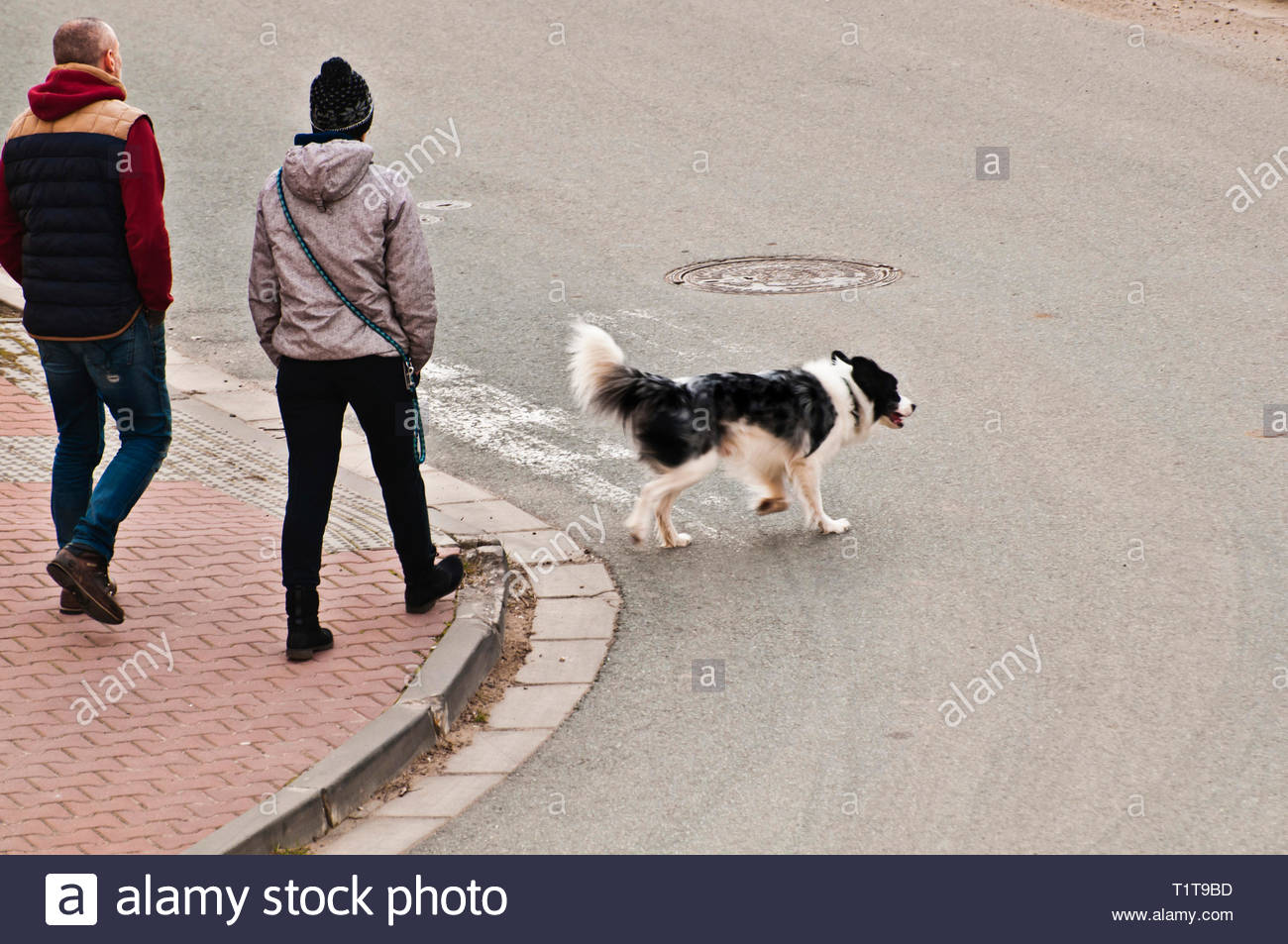 couple walking in the street with a dog - Stock Image