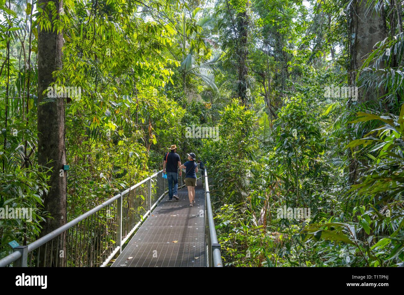 Daintree, Queensland. Visitors on the boardwalk in the Discovery Centre, Daintree Rainforest, Daintree National Park, Queensland, Australia Stock Photo