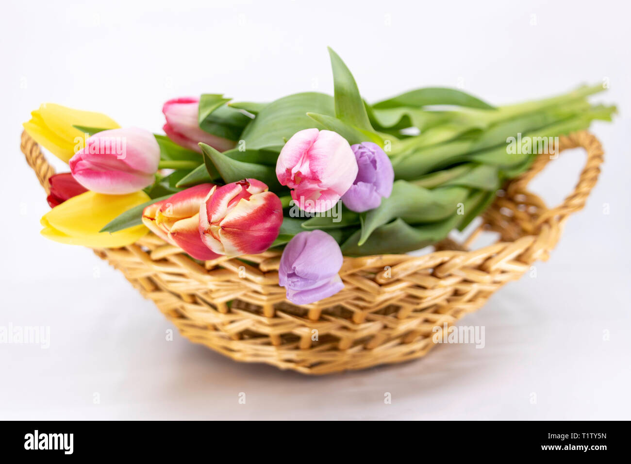 Easter and Spring, bouquet tulip - Stock Image