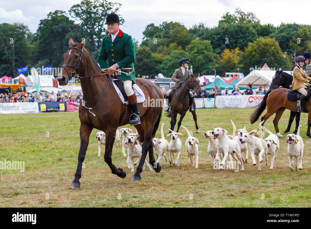 A demonstration by the North Norfolk Harriers at the 2018 Aylsham Agricultural Show, Norfolk, UK. Stock Photo