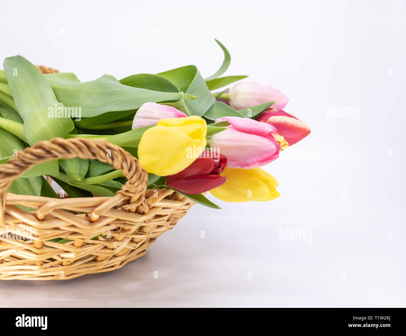 Graphic resource, arrival of spring bouquet of tulips - Stock Image