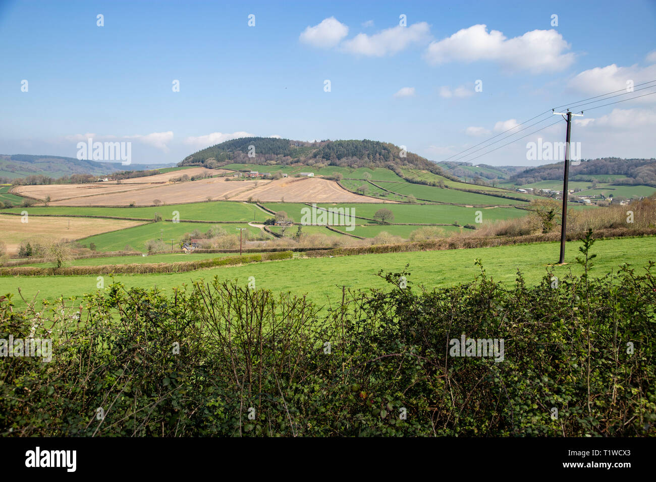 View looking across the Sid Valley, near Sidmouth, Devon, looking from Trow Hill to Buckton Hill. Stock Photo
