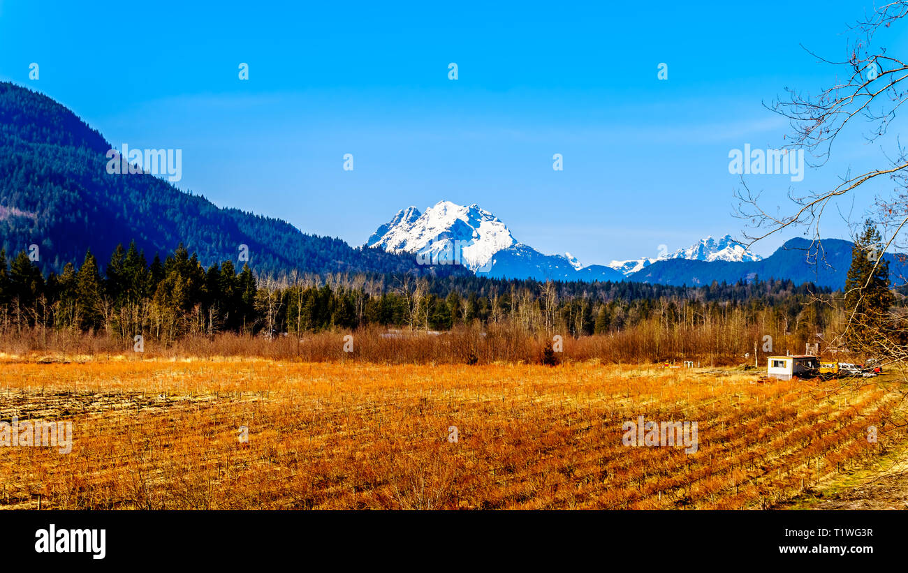 Mount Robie Reid on the left and Mount Judge Howay on the right, viewed from Sylvester Road over the Blueberry Fields near Missionin B.C., Canada Stock Photo