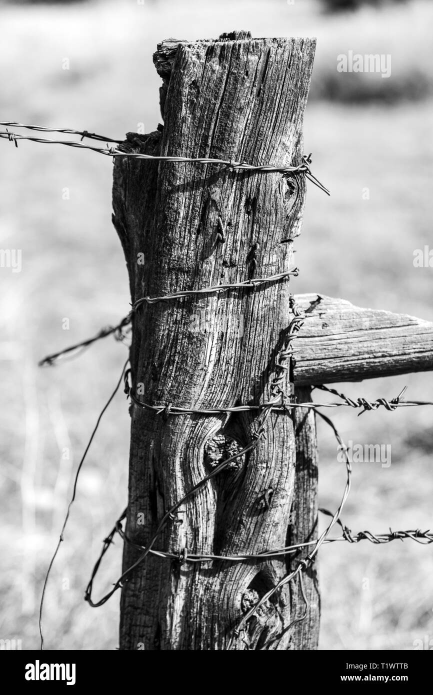 Black & white close-up of barbed wire fence & weathered wooden fence post; ranch in Central Colorado; USA - Stock Image