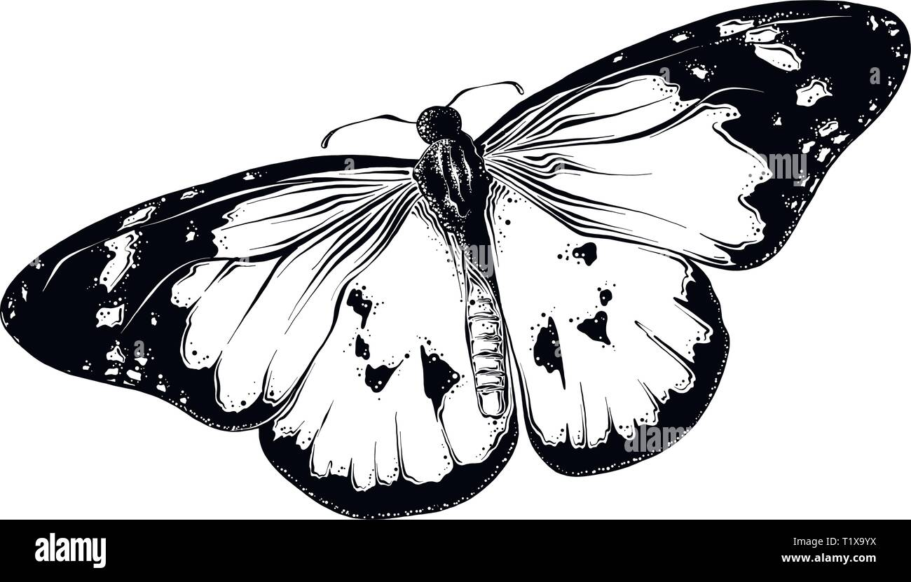 fb37eb72e Hand drawn sketch of butterfly in black color. Isolated on white  background. Drawing for posters, decoration and print. Vector illustration