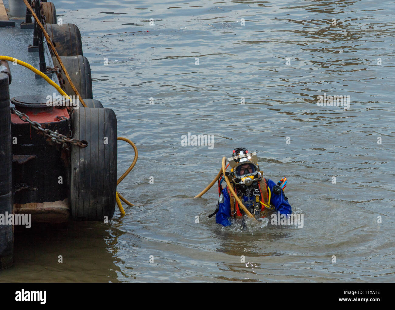 Diver emerges from the river Thames, London, UK, alongside the maintenance boat, after unblocking an underwater drain with a high pressure pipe. - Stock Image