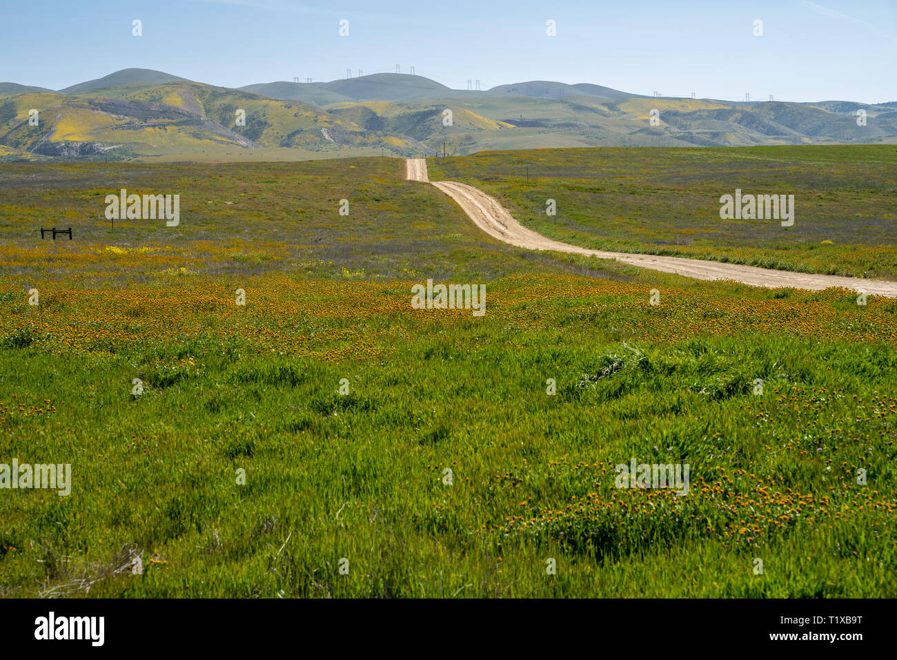 Seven Mile Road in Carrizo Plain National Monument, during the California superbloom in spring 2019 - Stock Image