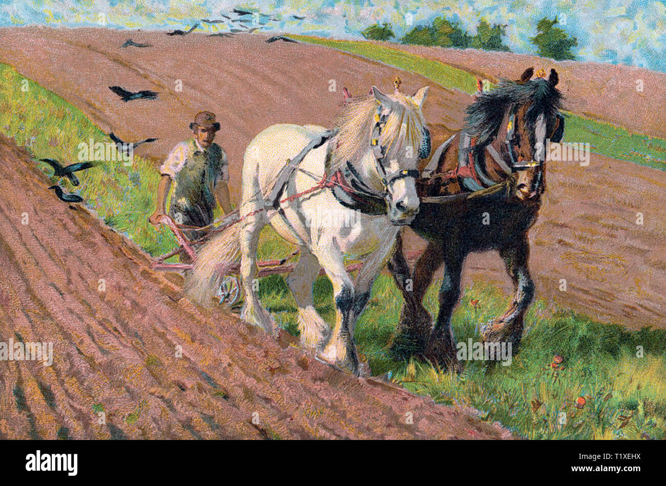 HORSE PLOUGH about 1900 - Stock Image